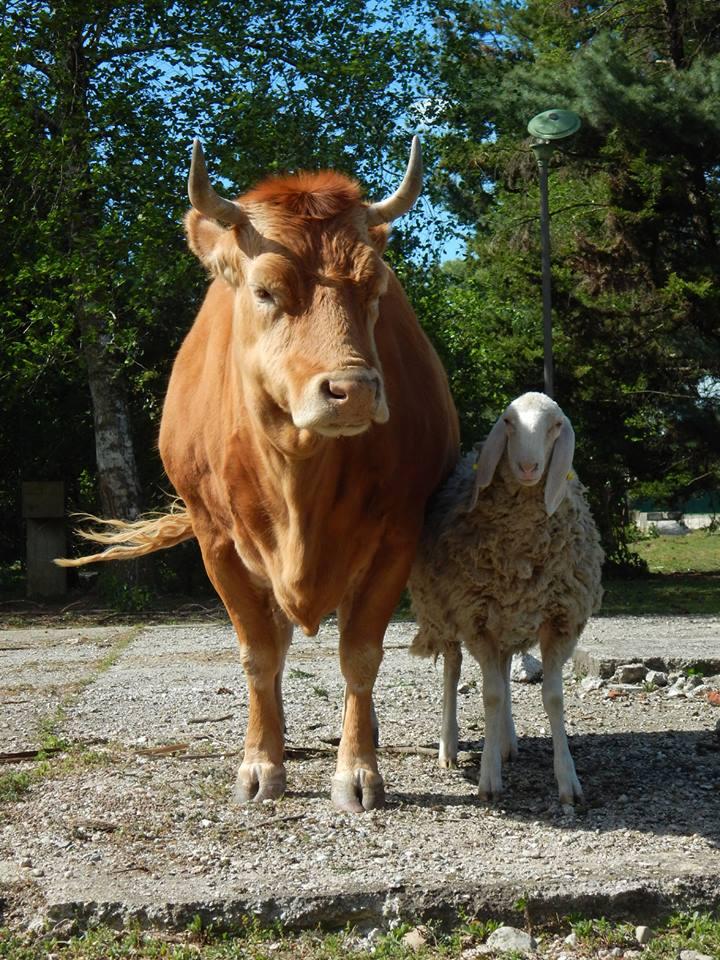 Venerd 2 giugno vita di fattoria fra domestico e for Piani di riproduzione della fattoria