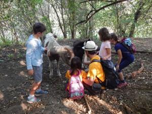 coccole pony