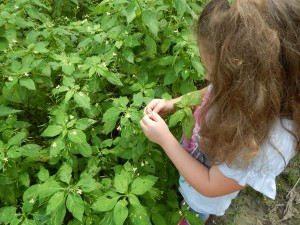 esamina piante